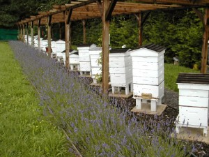The Perfect Home Apiary