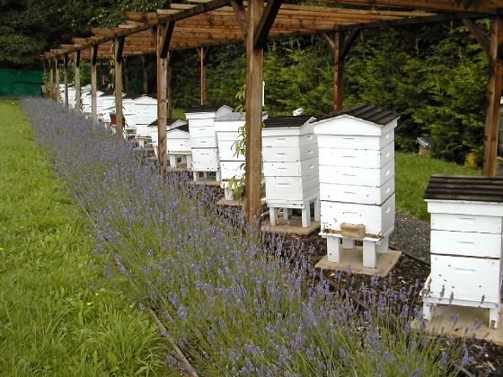 Five Considerations for setting up an Apiary or Bee Yard ...