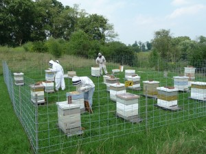 A Well Set Up Out Apiary