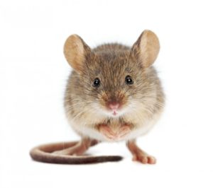 6508-mouse